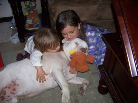 Pit Bulls Attacking Children